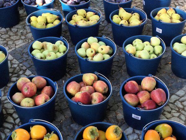 frutas en cubos 1