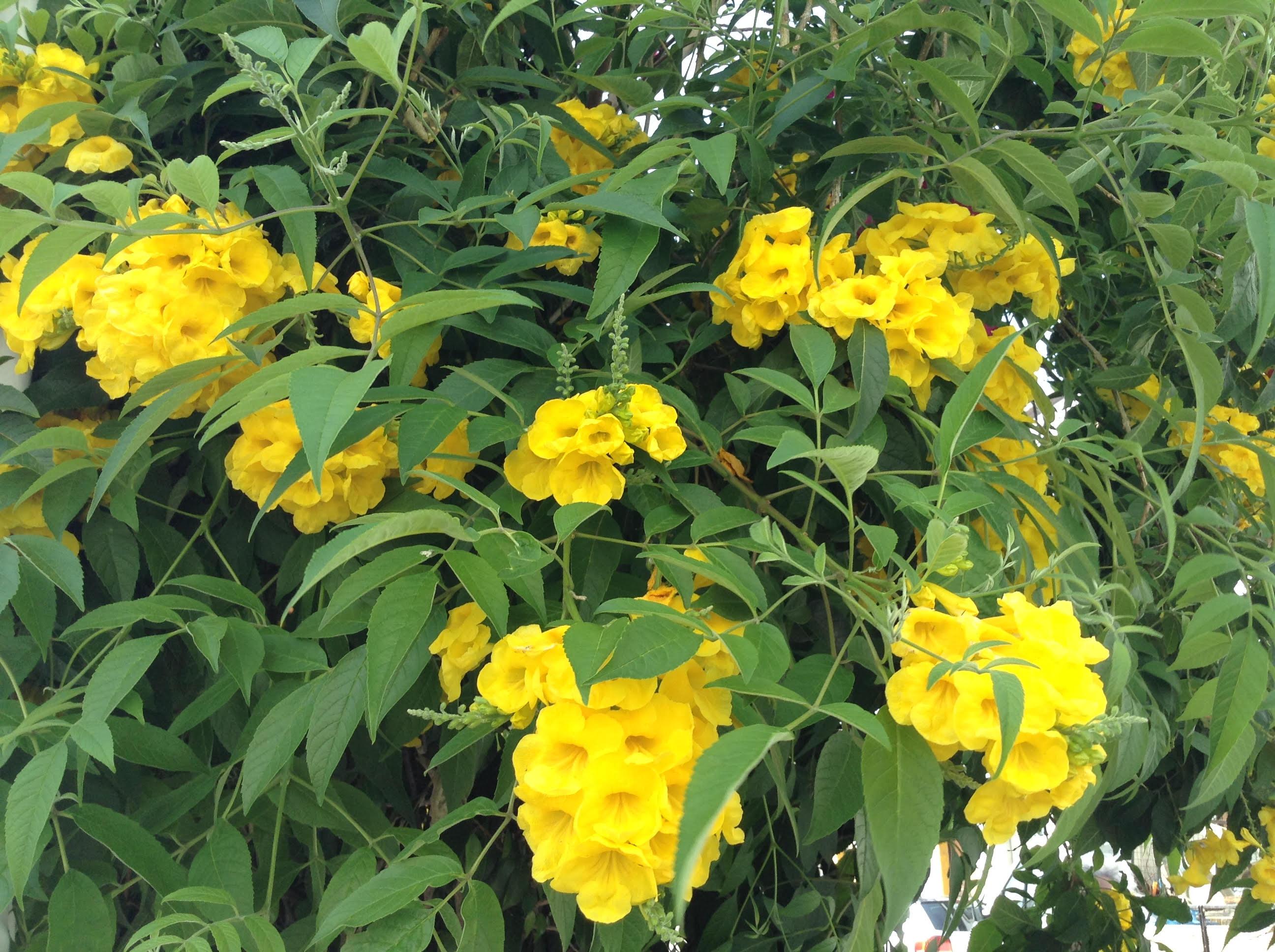 Flores de la luminosa y soleadaTavira
