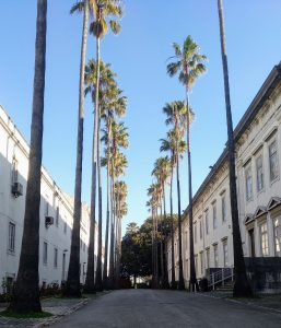 Acceso Museo Botanico Palmeras Lisboa